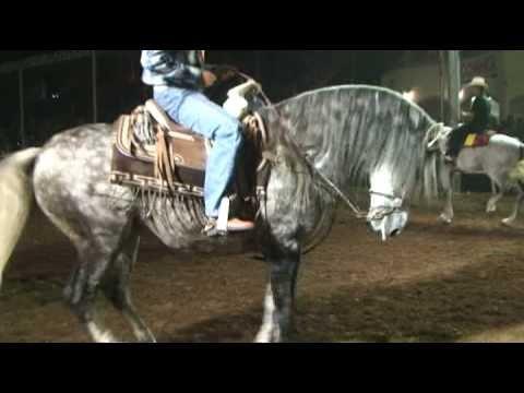 caballo bailador espartaco y copero