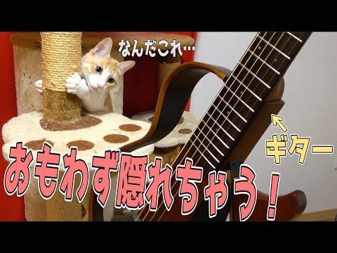Xxx Mp4 初めてギターを見る猫たちの反応が面白すぎたwwww 3gp Sex