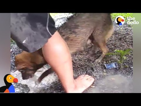 Xxx Mp4 Dog Mom Rescues DROWNING Puppies From Hole The Dodo 3gp Sex