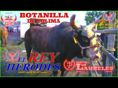 Xxx Mp4 BOTANILLA DE COLIMA CAE PRIVADO DE LOS LOMOS DEL REY HERODES LOS TOROS DIVINOS 3gp Sex