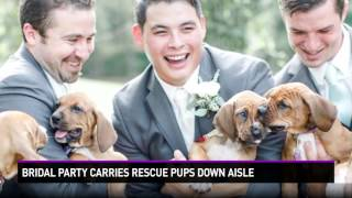 Bridal Party Ditches Flowers for Puppies