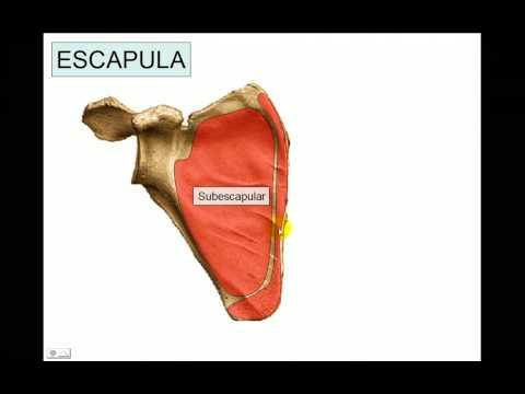 OSTEOLOGIA 1