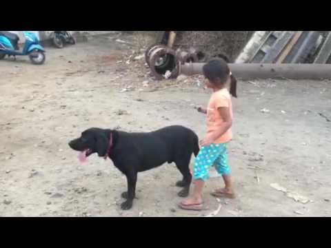 Cute Girl Enjoying Dog Riding