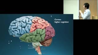 Dr. Octavio Choi presents Brain Basics: An Introduction to Cognitive Neuroscience