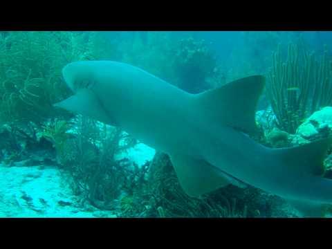 Xxx Mp4 Bonaire Nurse Shark2 3gp Sex