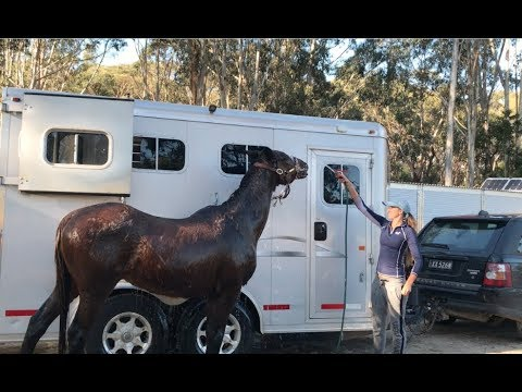Xxx Mp4 Giving My 28yo Retired Horse A Makeover 3gp Sex