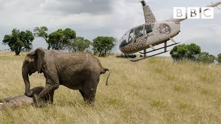 Elephants rescued by helicopter 🐘🚁 - Equator from the Air - BBC