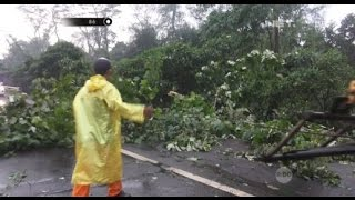 Demi Melihat Pohon Tumbang di Tol, Lalu Lintas Jadi Tersendat - 86