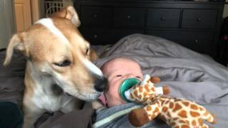 ADORABLE Dog Licks a BABY'S HEAD!