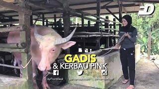 GADIS & KERBAU PINK