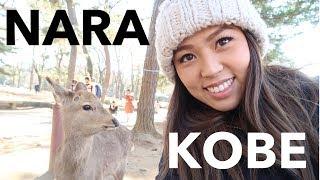Japan Vlog 4- Nara Park And Kobe