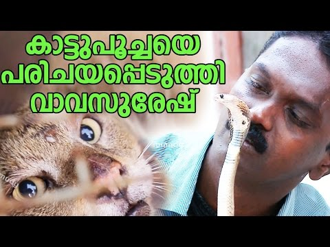 Wow ! Vava Suresh Catching a Wild Cat & Baby Cobra  | Snake Master