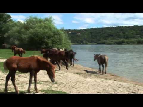Konji Krčedinske ade 720p sr