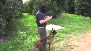 كلب مدرب