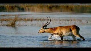 Chipondo Chandi Ackim Simukonda Zambian Music