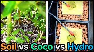 Hydroponic weed vs soil video 3gp mp4 flv hd download for Soil vs hydro