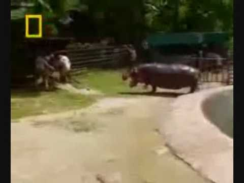 Top 10 Most dangerous animals in the world by odissey505