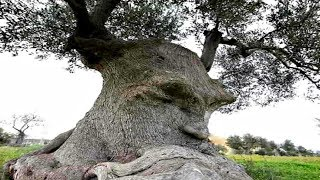 20 Bizarre Trees with Faces