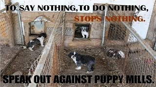 The Shocking Truth About Puppy Mills (Documentary in HD!!!)