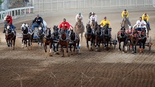 3 horses euthanized after being injured in Calgary Stampede