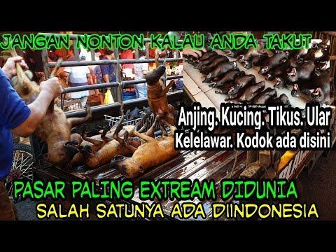 Xxx Mp4 ANDA BERANI KESINI DAGING KUCING ANJING TIKUS ULAR DIJUAL BEBAS DISINI PASAR EXTREME INDONESIA 3gp Sex