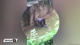 Gorilin ölümüne sebep olan çiftin sabıka kaydı kabarıkmış!