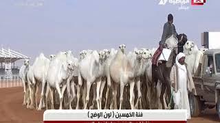 لاستديو المصاحب لتغطية اليوم من مهرجان الملك عبدالعزيز للإبل يوم الثلاثاء ٢٣-١-٢٠١٨م