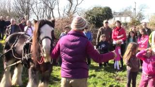 Helping Out At A National Tree Week Event – Horse Logging, Tree Planting, And Waving Hands About..