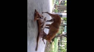 dogs love 2
