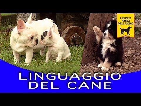 LINGUAGGIO DEL CANE trailer documentario