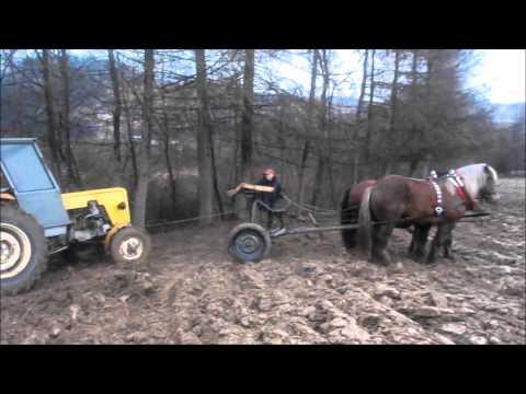 Konie zimnokrwiste pracują Horse pulling