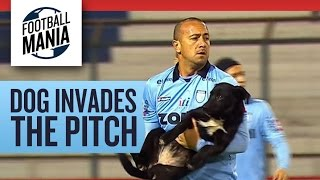 Wild Dog Invades the Pitch in Iquique - Copa Sudamericana