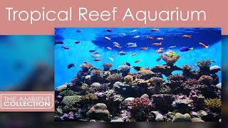 Tropical Reef Aquarium in Ultra HD Filmed with 4k Sony Video Cameras
