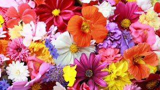Flowers Name English And Bangla | ফুলের নাম ইংরেজী ও বাংলায়
