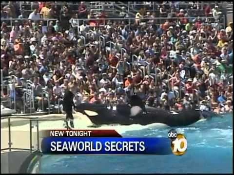 Death comes sudden SeaWorld Trainer Killed by Shamu YAHSHUAsavesToHeaven