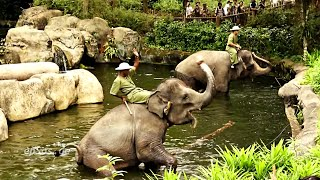 Funny Elephant Show in Singapore Zoo.