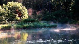 Bruits de la nature, Chants des Oiseaux -