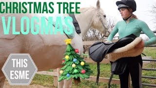 Vlogmas | Naughty Donkeys and Getting our Christmas tree | This Esme