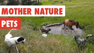 Mother Nature Pets | Funny Pet Video Compilation 2017