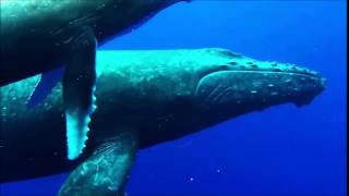 Whalesnorkeing With Nature-Minds In Sri Lanka
