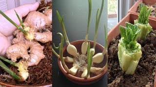 8 Vegetables and Herbs You Can Re grow Again and Again Inside your House or Garden