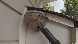 Baldfaced Hornet Nest Removed From Under House Overhang. First Job of 2016.