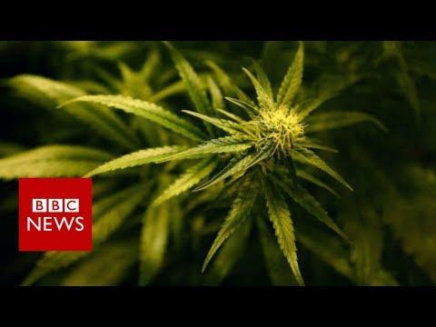 Xxx Mp4 Should Canada S Pot Convicts Get Amnesty BBC News 3gp Sex