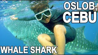 SWIMMING with WHALE SHARKS (NAKAKALOKAAA!!!) | LC VLOGS #124