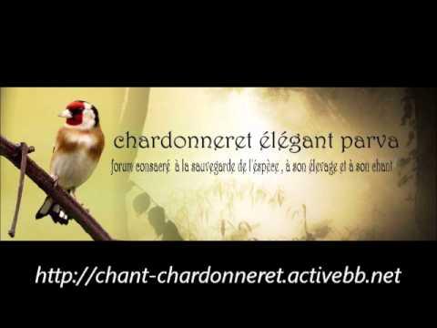 Chant Chardonneret Bois Descart chant chardonneret.activebb