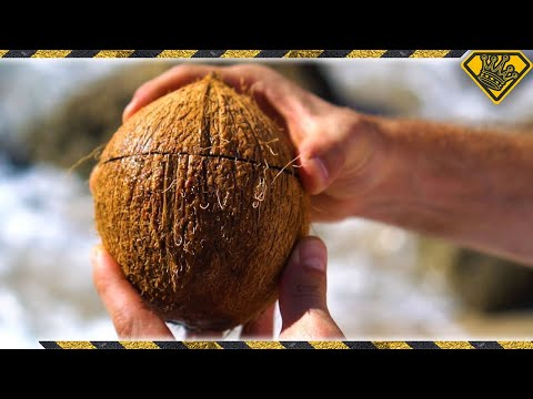 Xxx Mp4 How To Open Coconuts Without Any Tools 3gp Sex