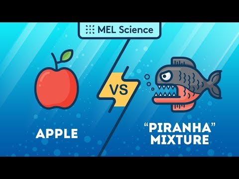 Xxx Mp4 An Apple Vs One Of The Most Dangerous Mixtures In The World 3gp Sex