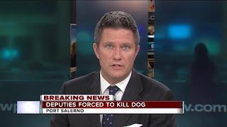 Dog attacks woman in Martin County