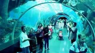 Amazing Aquarium Tunnel in Singapore of Asia