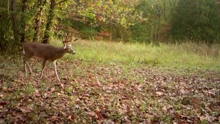 Blackwood Outdoors Trail Camera Review Episode #7